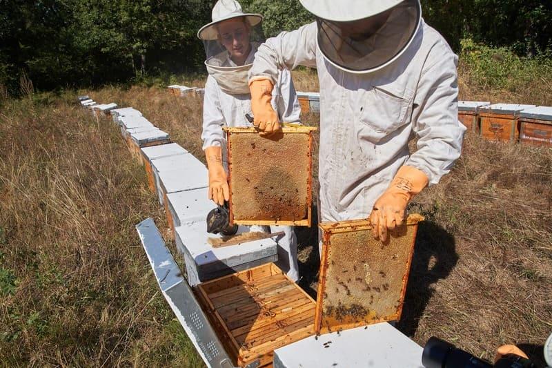 Coll de l'Alba apicultors